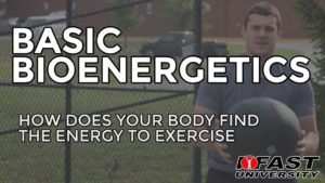 Basic Bioenergetics: How does your body find the energy to exercise?