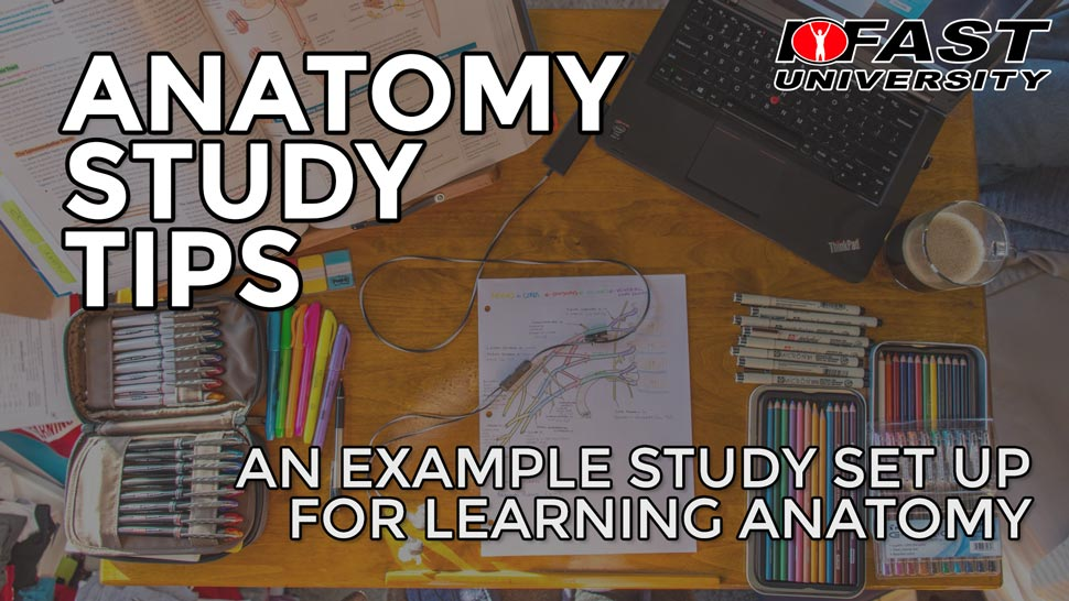 Anatomy Study Tips: An example study set up for learning anatomy