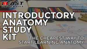Introductory Anatomy Study Kit: The cheapest way to start learning anatomy