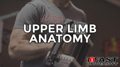 Upper Limb Anatomy