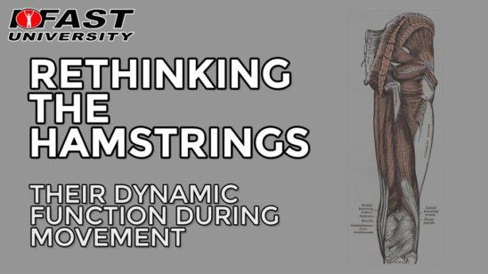 Rethinking the Hamstrings