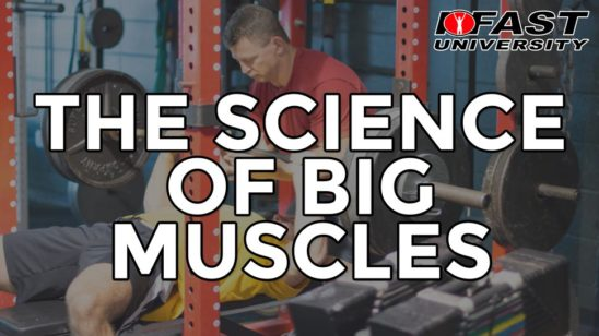 The Science of Big Muscles